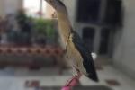 نجات پرنده حواصیل از منزل مسکونی