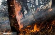آتش سوزی جنگل ها؛ زنگ خطر نابودی زمین