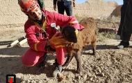 نجات بزغاله از عمق 40 متری چاه